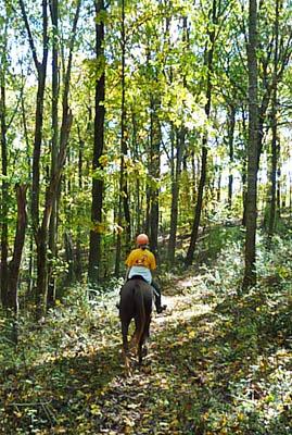 43 old woodland trail jefferson nj